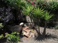 Angolo giardino del Bed & Breakfast Il Mandorlo di Sciacca.  - Sciacca (10568 clic)