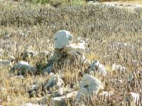 C.da Pisciotto - memorie di pietra  - Scicli (2220 clic)