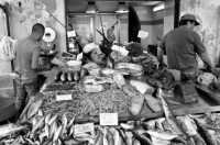 bancarelle di pesce  - Siracusa (4524 clic)