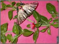 vegetazione PALERMO GIUSEPPE DRAGO