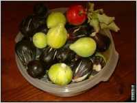 frutta PALERMO GIUSEPPE DRAGO