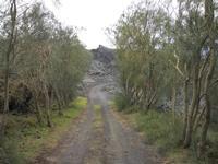 Passo delle Ginestre All'interno della colata lavica del 1981 si trova un breve tratto delimitato da ginestre sulla strada Altomontana. Randazzo, Pirao, Etna  - Etna (2991 clic)