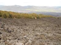 Colata Lavica 1981 Randazzo vista dalla colata lavica del 1981  - Etna (3786 clic)