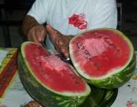 Taglio dell'anguria - Agosto 2005 PALERMO Alfredo Principe