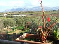 Paesaggio visto dalla camera della struttura agroturistica Baglio Carta di Balestrate.-  Gennaio 2009  - Balestrate (5193 clic)
