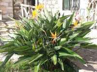 Cespuglio di Sterlizie - Febbraio 2007  - Taormina (9112 clic)