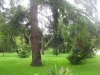 Giardini di Villa Malfitano - Ottobre 2009 PALERMO Alfredo Principe