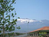 Vista  del Etna ,da Paternò  Viale dei  platani  - Paternò (4067 clic)