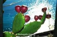 Fichi d'India a Taormina  - Taormina (5886 clic)
