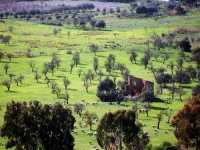 pascolo  - Agrigento (5076 clic)