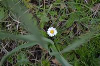 Bosco della Ficuzza  Riserva naturale    - Roccamena (808 clic)