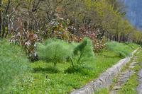 Bosco della Ficuzza  Riserva naturale    - Roccamena (757 clic)