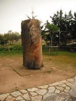 pirandello albero di meditazione  - Agrigento (5959 clic)