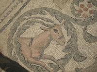 museo dei mosaici  - Piazza armerina (4562 clic)