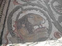 museo dei mosaici  - Piazza armerina (4192 clic)