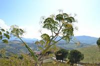 Veduta dal castello   - Cefalà diana (696 clic)