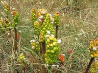 flora e babbaluci - 2 giugno 2010  - Calatafimi segesta (2269 clic)