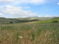 panorama - 2 giugno 2010  - Segesta (1605 clic)