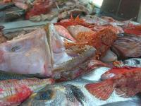 pesci in esposizione in un ristorante del porto - 14 marzo 2010  - Castellammare del golfo (3089 clic)