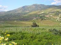 la campagna a primavera - 11 aprile 2010   - Segesta (1753 clic)