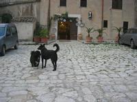 Baglio Isonzo - cani e bottega ceramica - 1 novembre 2010  - Scopello (1637 clic)