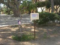 giardino pubblico - Buon Compleanno a Denise Pipitone dai suoi compagni di classe - 9 maggio 2010   - Mazara del vallo (1854 clic)