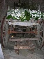 carretto con addobbo floreale - Baglio Strafalcello - 22 giugno 2010  - Castellammare del golfo (1586 clic)
