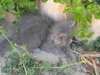 gattino - Castello di Rampinzeri - 6 giugno 2010  - Santa ninfa (2285 clic)