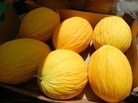 meloni gialli - 26 luglio 2011  - Alcamo (927 clic)