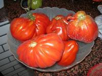 pomodori cuore di bue (piemontesi) - 5 agosto 2010  - Alcamo marina (3046 clic)