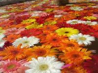 fontana - vecchio mercato - Infiorata 2010 - 16 maggio 2010  - Noto (2662 clic)