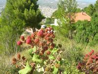 Monte Bonifato - more - 25 luglio 2010   - Alcamo (1854 clic)