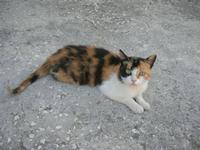 gatto - 31 agosto 2010  - Chiusa sclafani (2116 clic)