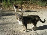 gatti - 31 agosto 2010  - Chiusa sclafani (2470 clic)