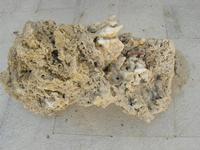 roccia - Castello di Rampinzeri - 6 giugno 2010  - Santa ninfa (2207 clic)