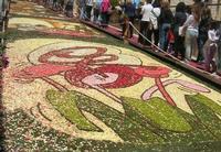 Infiorata 2010 - Bozzetti ispirati al tema: Musica dipinta: le forme e i colori della musica  - ALLEGRIA - Via Nicolaci - 16 maggio 2010   - Noto (2766 clic)