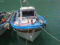 al porto: barche - 2 maggio 2010  - Castellammare del golfo (1851 clic)