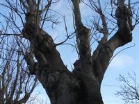 tronco - alberi spogli - 28 febbraio 2010  - Torretta granitola (3907 clic)