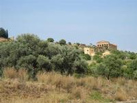 Parco archeologico Valle dei Templi - 3 giugno 2011  - Agrigento (1950 clic)