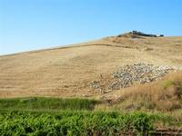 campi di grano dopo la mietitura e gregge al pascolo - 3 luglio 2011  - Contessa entellina (1721 clic)
