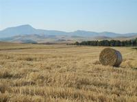 campo di grano dopo la mietitura ed all'orizzonte il Monte Bonifato - 3 luglio 2011  - Contessa entellina (1582 clic)