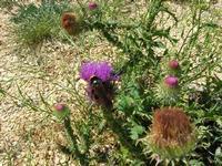fiore ed insetto - 6 giugno 2010  - Santa ninfa (1965 clic)