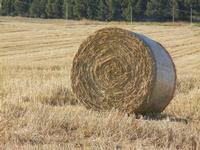campo di grano dopo la mietitura e balla di paglia - 3 luglio 2011  - Contessa entellina (1897 clic)