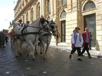 Corteo Barocco - 16 maggio 2010  - Noto (2741 clic)