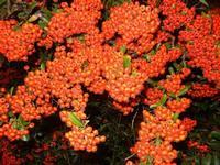 flora lungo la strada - Monte Bonifato - 29 settembre 2011  - Alcamo (632 clic)