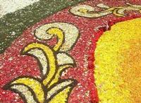 Infiorata 2010 - Bozzetti ispirati al tema: Musica dipinta: le forme e i colori della musica - SUONATORE DI FLAUTO - particolare - Via Nicolaci - 16 maggio 2010   - Noto (2544 clic)