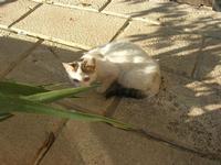 gatto del porto - 12 febbraio 2011  - Castellammare del golfo (1075 clic)