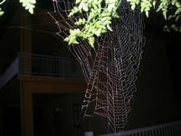 la tela del ragno - 1 marzo 2010  - Alcamo (1874 clic)