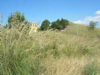 casa e rudere nei pressi del Castello di Rampinzeri - 6 giugno 2010  - Santa ninfa (1532 clic)