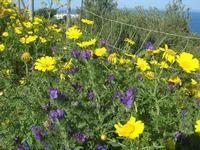 flora alle porte della Riserva - 3 aprile 2011  - Riserva dello zingaro (1270 clic)